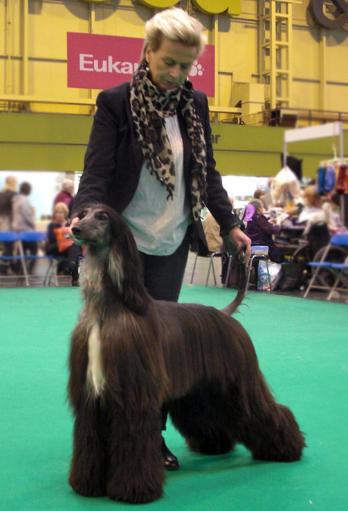 Kingsleah Star of Asia at Crufts 2011